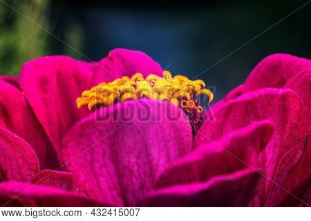 A Large Flower With Crimson Petals And A Yellow Center On A Blurry Background.