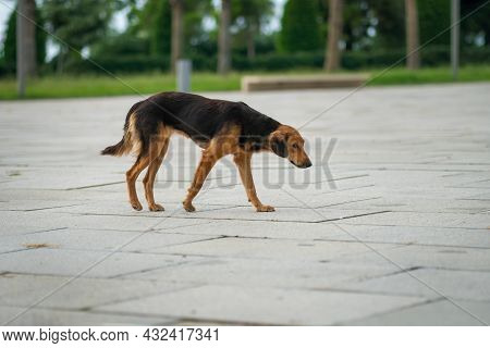 Side View Of A Sad Stray Mutt In The Park On A Summer Day. Concept Of Homeless Dogs, An Animal Shelt