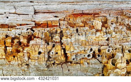 Texture Of Decaying Wood Trunk With Cracks And Holes, Eaten By Pests, Closeup.