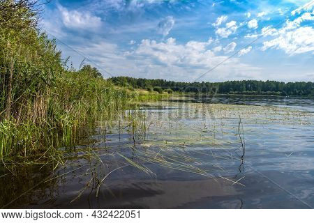 The Shore Of A Large Lake With Sedge And Water Lilies On A Summer Day.