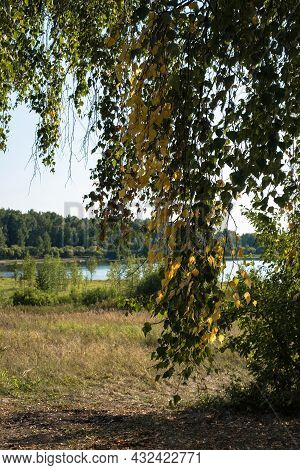 View Of The Lake Through The Yellow And Green Birch Leaves On A Sunny Day, Russia.