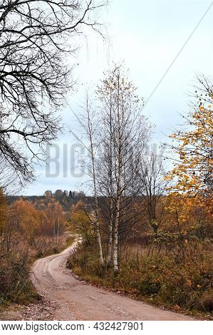 Country Road, A Field With Dry Plants And Birch Trees With Yellow Leaves. Rural Autumn Landscape. Co