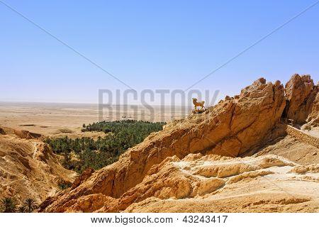 Mountain Oasis Chebika.