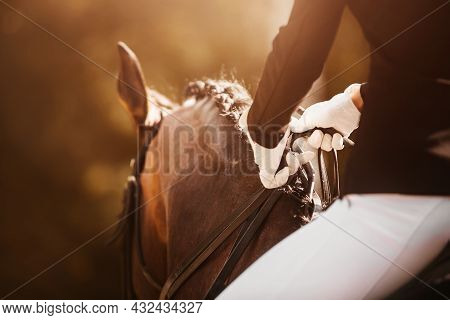A Rider With White Gloves On His Hands Sits Astride A Bay Horse With A Braided Mane, Holding The Bri