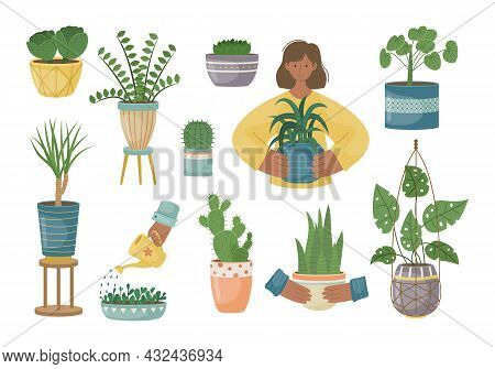 The Set Of House Plants In The Pots. Planting Plants. Decorative Plants In The Interior Of The House