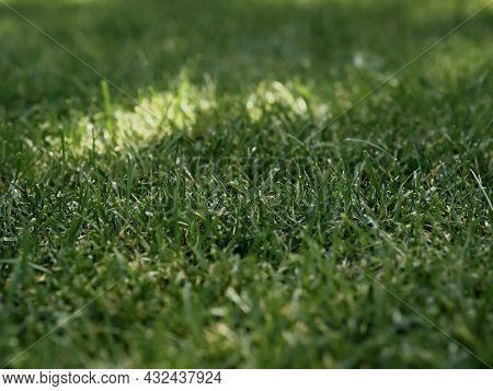 Close-up Green Grass Background Texture, Green Lawn Pattern And Texture Background.