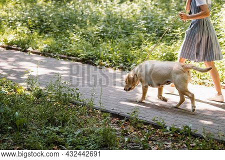 Partial View Of Woman Strolling On Walkway With Labrador On Leash, Banner