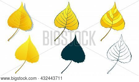 Big Set Of Vector Fall Tree Leaf Shapes Drawing In Different Styles