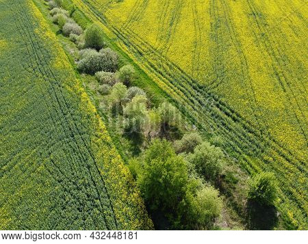 An Abandoned Reclamation Canal In The Middle Of A Yellow Rapeseed Field. Rape Crops, Agricultural La
