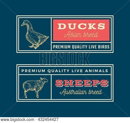 Meat And Poultry Retro Framed Badges Or Logo Templates Set. Hand Drawn Duck And Sheep Sketches With