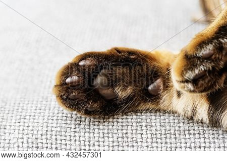 Soft And Fluffy Pads Of Cat Paws Close Up. Cute Sleeping Pet. Paws Of Bengal Cat.