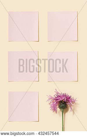 Minimal Background With Purple Thorny Wild Flower And Pink Squares Paper For Notes Or Messages. Blan