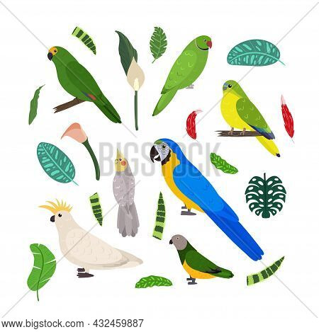 Design Template With Parrots In Square For Kid Print. Rectangle Composition Of Tropical Birds Macaw,