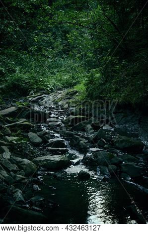 A Stream Flows Into The Thick Of A Dark Forest Along The Slopes Of The Mountains, A Summer Landscape
