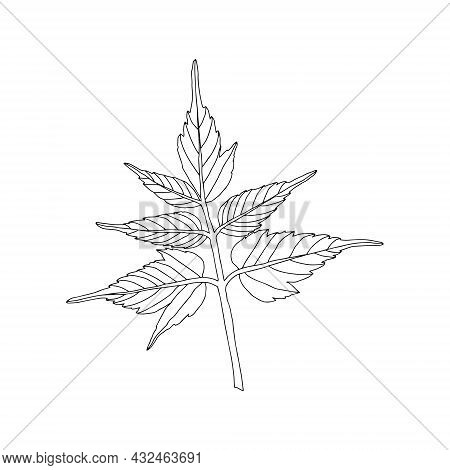 Illustration Of A Black Maple Leaf Isolated On A White Background