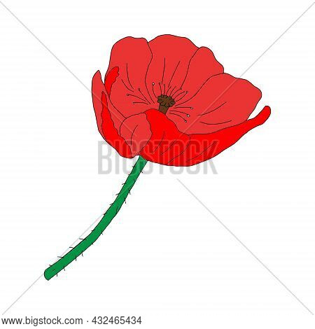 A Vector Illustration Of One Red Common Poppy Flower Isolated On A White Background