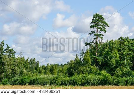Beautiful Summer Landscape With Forest, High Pine And Cloudy Sky