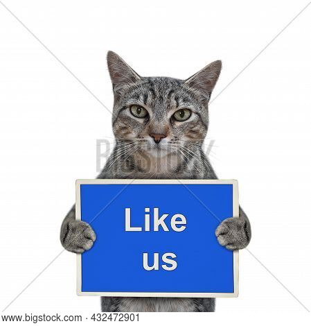 A Gray Cat Holds A Blue Sign That Says Like Us. White Background. Isolated.