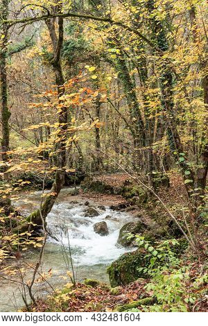 Vertical Photo Of A Flowing Stream In A Forest In Autumn
