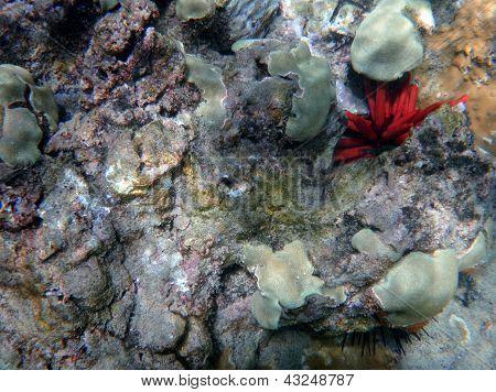 Coral Reef Off The Coast Of Maui
