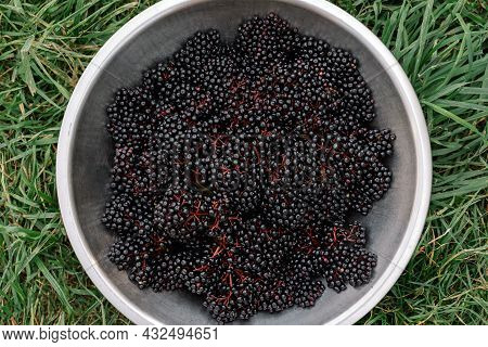 Raw Ripe Elderberry In A Bowl Standing On A Green Grass, Top Down View. Clusters Fruit Black Elderbe