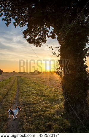 Sunset On A Dog Walk Path Through Rural Country Fields. Countryside Agricultural Landscape With Brid