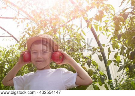 Adorable Little Child Boy In Straw Hat Hold Tomatoes In Greenhouse. Kid Gardening And Harvesting. Co