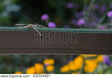 Amazing Insects. Dragonfly With Colors Yellow And Black Near A Window, Looking To A Beautiful Garden