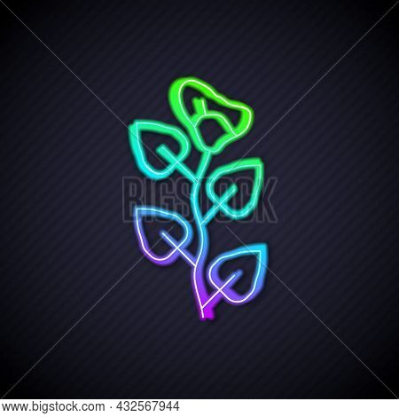 Glowing Neon Line Ivy Branch Icon Isolated On Black Background. Branch With Leaves. Vector