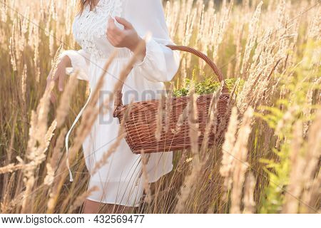 Woman Holding Basket With Freshly Picked Organic Herb.