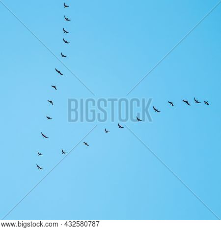 Flock Of Wild Birds Flying In A Wedge Against Blue Sky