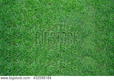 Green Grass Background Texture. Green Lawn Texture Background. Top View. Surface Of Football Turf