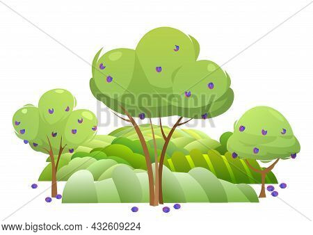 Garden And Rolling Hills. Rural Landscape With Fruit Trees And Farmer Hills. Ripe Harvest Plum. Cute