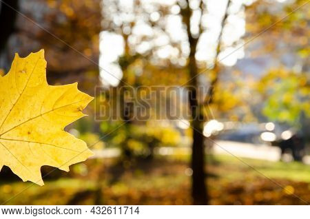 Close-up Yellow Maple Leaf On Blurred Background Of Park. Autumn Background Of Leaf In The Park With