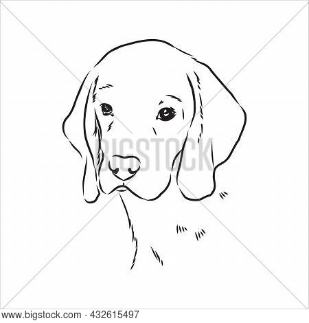 Decorative Portrait Of Standing In Profile Beagle, Vector Isolated Illustration In Black Color On Wh