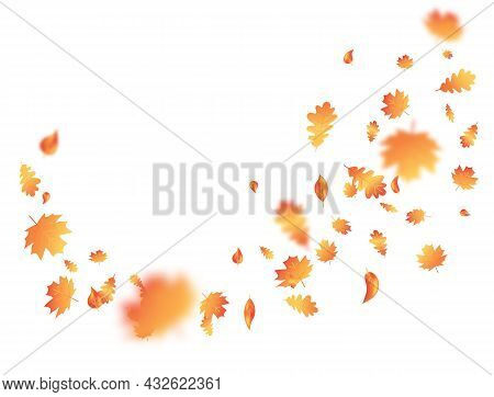 Autumn Leaf Flying On Background. Thanksgiving Day Card. Fall Maple Composition. October Foliage Fra