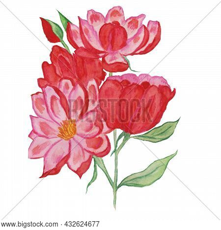 Bouquet Of Pink Flowers With Yellow Pistils And Stamens With Delicate Petals, Falling, Floating Flow