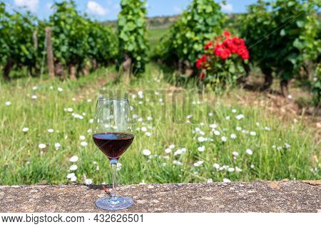 Tasting Of Burgundy Red Wine From Grand Cru Pinot Noir  Vineyards, Glass Of Wine And View On Green V