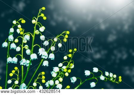 Spring Landscape. Flowers Lily Of The Valley. Outdoors