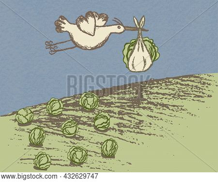 A Stork Carries A Bundle Of Cabbage Over A Cabbage Field. Grunge Creative Template With Copy Space.