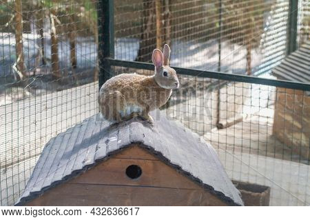 Homemade Red Rabbit On The Roof Of A Wooden House For Rabbits.