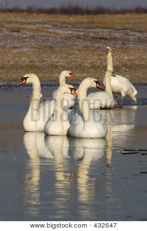 Swan Group