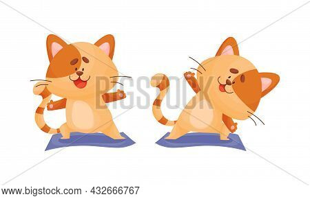 Ginger Cat With Striped Tail Doing Yoga Standing In Asana Vector Set