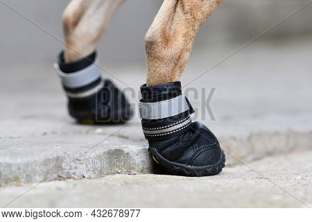 Protective Dog Shoes To Cover Injured Paw While Walking Or To Protect Paw From Hot Street