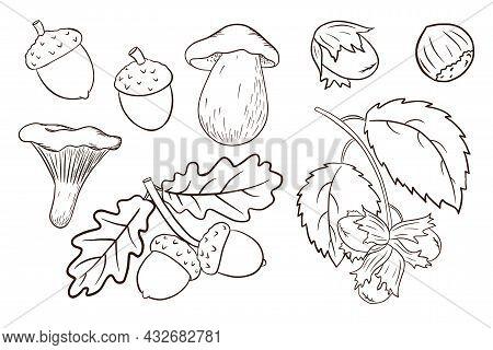 Hand Drawn Harvest Elements Set. Oak Leaves, Acorns, Hazelnut, Mushrooms. Forest Decorative Collecti