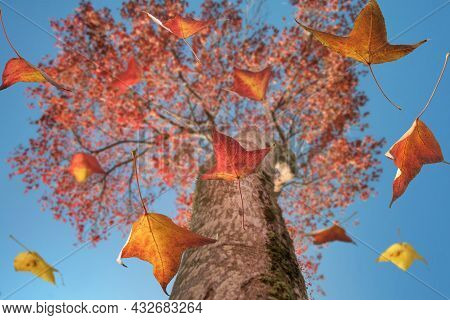 Autumn Scene, The Falling Color Leaves Of A Maple Tree, Selective Focus