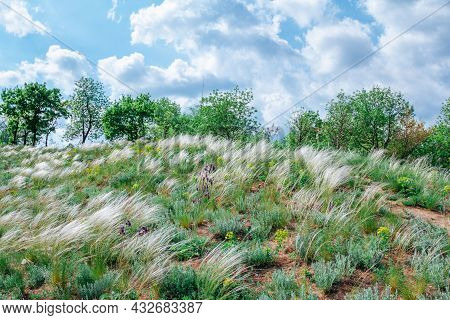 Spring Landscape - Meadow On A Hill In A Forest With Fresh Green Grass, Flowers And White Stipa Or F