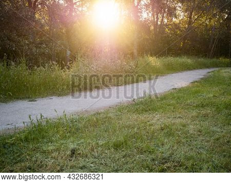 Trail In A Coniferous Forest At Sunset