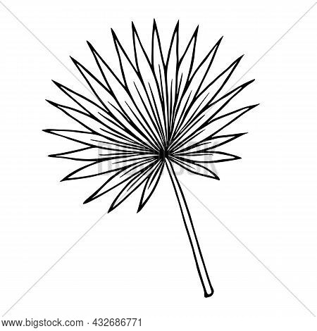 Tropical Palm Branch With Fan Leaf, Outline Floral Hand Drawn Sketch On White Background. Minimal Li