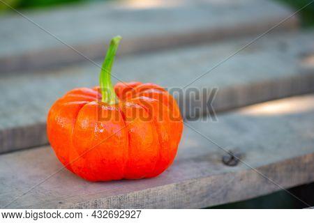 Orange Decorative Pumpkin And Rowan On Chalkboard